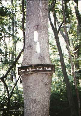 Appalachian Trail sign slowly being eaten by the tree on which it's mounted